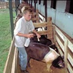 Boy Cleaning Pig