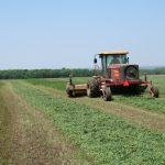 Alfalfa being mowed